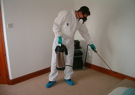 Pest Exterminator Benefits of Hiring an Expert